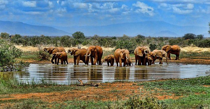 Safari en Afrique du Sud : vivez une aventure hors du commun